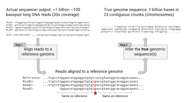 Can a 'Google AI' Build Your Genome Sequence?